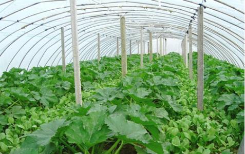 南方蔬菜种植时间表 适合冬季种植的蔬菜_南方冬天种植什么蔬菜