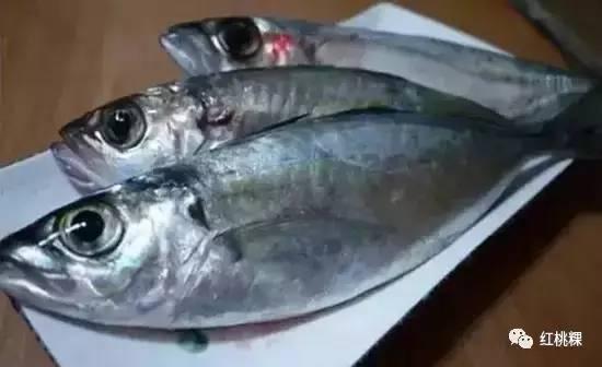 潮汕识鱼大全|这么多鱼和海鲜,你都认得清吗?
