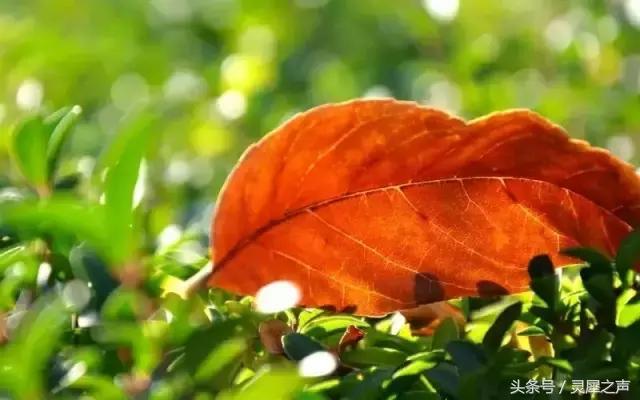 叶子离别时