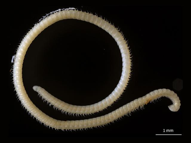 2017年十大新物種